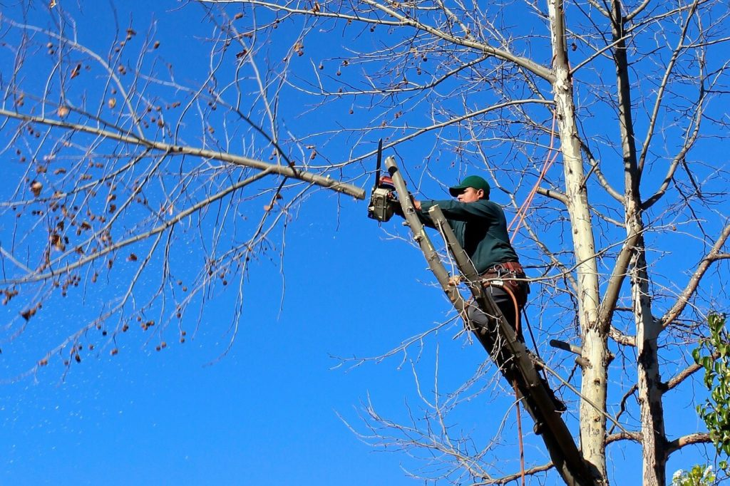Contact Us-Temecula Tree Trimming and Stump Grinding Services-We Offer Tree Trimming Services, Tree Removal, Tree Pruning, Tree Cutting, Residential and Commercial Tree Trimming Services, Storm Damage, Emergency Tree Removal, Land Clearing, Tree Companies, Tree Care Service, Stump Grinding, and we're the Best Tree Trimming Company Near You Guaranteed!