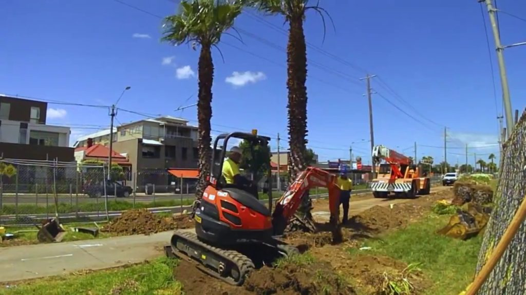 Palm Tree Removal-Temecula Tree Trimming and Stump Grinding Services-We Offer Tree Trimming Services, Tree Removal, Tree Pruning, Tree Cutting, Residential and Commercial Tree Trimming Services, Storm Damage, Emergency Tree Removal, Land Clearing, Tree Companies, Tree Care Service, Stump Grinding, and we're the Best Tree Trimming Company Near You Guaranteed!