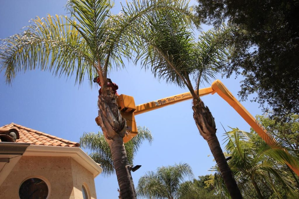 Palm Tree Trimming-Temecula Tree Trimming and Stump Grinding Services-We Offer Tree Trimming Services, Tree Removal, Tree Pruning, Tree Cutting, Residential and Commercial Tree Trimming Services, Storm Damage, Emergency Tree Removal, Land Clearing, Tree Companies, Tree Care Service, Stump Grinding, and we're the Best Tree Trimming Company Near You Guaranteed!