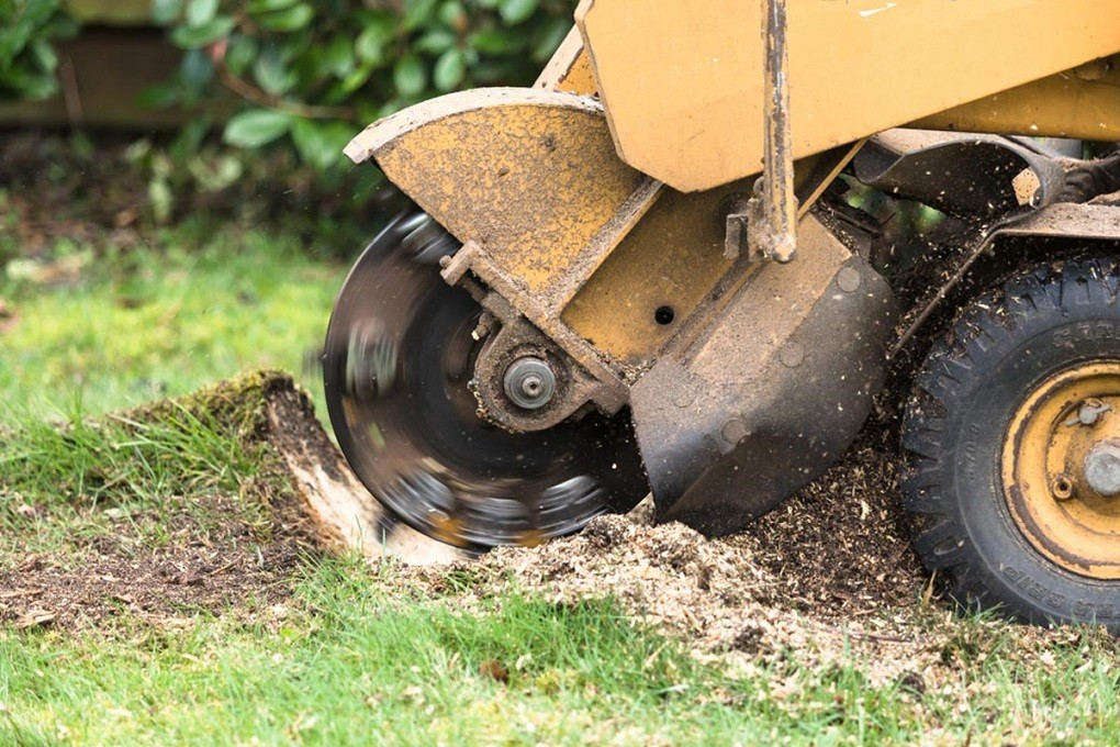 Stump Grinding-Temecula Tree Trimming and Stump Grinding Services-We Offer Tree Trimming Services, Tree Removal, Tree Pruning, Tree Cutting, Residential and Commercial Tree Trimming Services, Storm Damage, Emergency Tree Removal, Land Clearing, Tree Companies, Tree Care Service, Stump Grinding, and we're the Best Tree Trimming Company Near You Guaranteed!