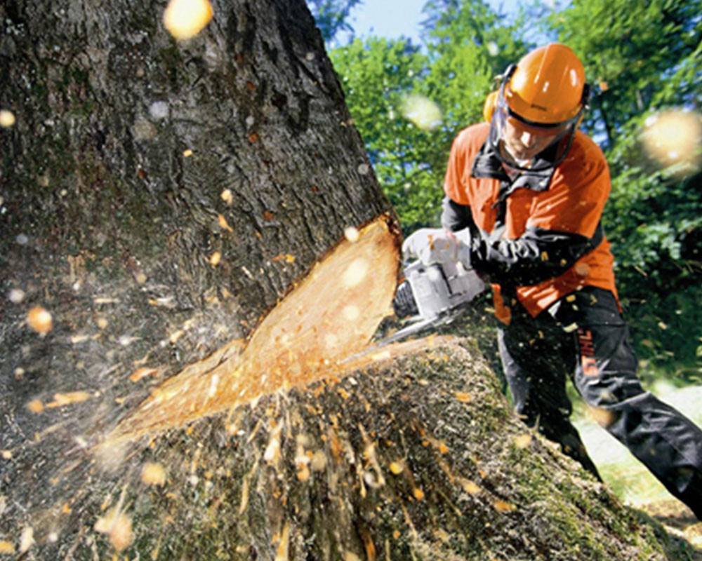 Tree Cutting-Temecula Tree Trimming and Stump Grinding Services-We Offer Tree Trimming Services, Tree Removal, Tree Pruning, Tree Cutting, Residential and Commercial Tree Trimming Services, Storm Damage, Emergency Tree Removal, Land Clearing, Tree Companies, Tree Care Service, Stump Grinding, and we're the Best Tree Trimming Company Near You Guaranteed!