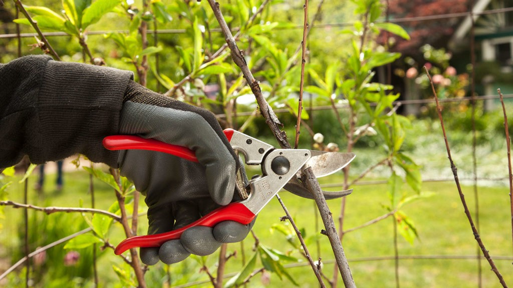 Tree Pruning-Temecula Tree Trimming and Stump Grinding Services-We Offer Tree Trimming Services, Tree Removal, Tree Pruning, Tree Cutting, Residential and Commercial Tree Trimming Services, Storm Damage, Emergency Tree Removal, Land Clearing, Tree Companies, Tree Care Service, Stump Grinding, and we're the Best Tree Trimming Company Near You Guaranteed!
