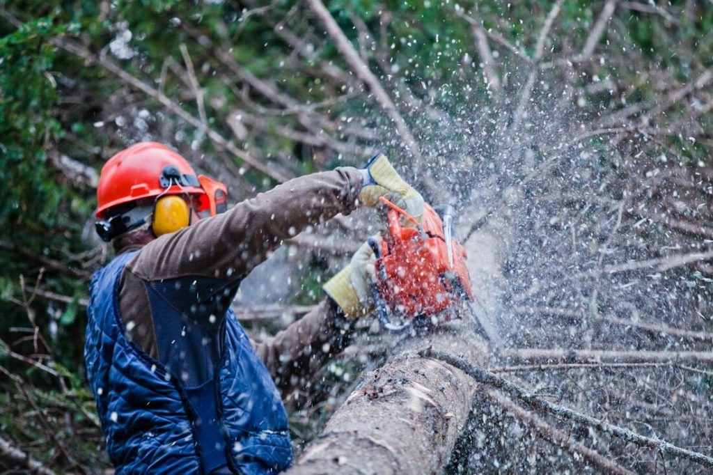 Dutch Village-Temecula Tree Trimming and Stump Grinding Services-We Offer Tree Trimming Services, Tree Removal, Tree Pruning, Tree Cutting, Residential and Commercial Tree Trimming Services, Storm Damage, Emergency Tree Removal, Land Clearing, Tree Companies, Tree Care Service, Stump Grinding, and we're the Best Tree Trimming Company Near You Guaranteed!