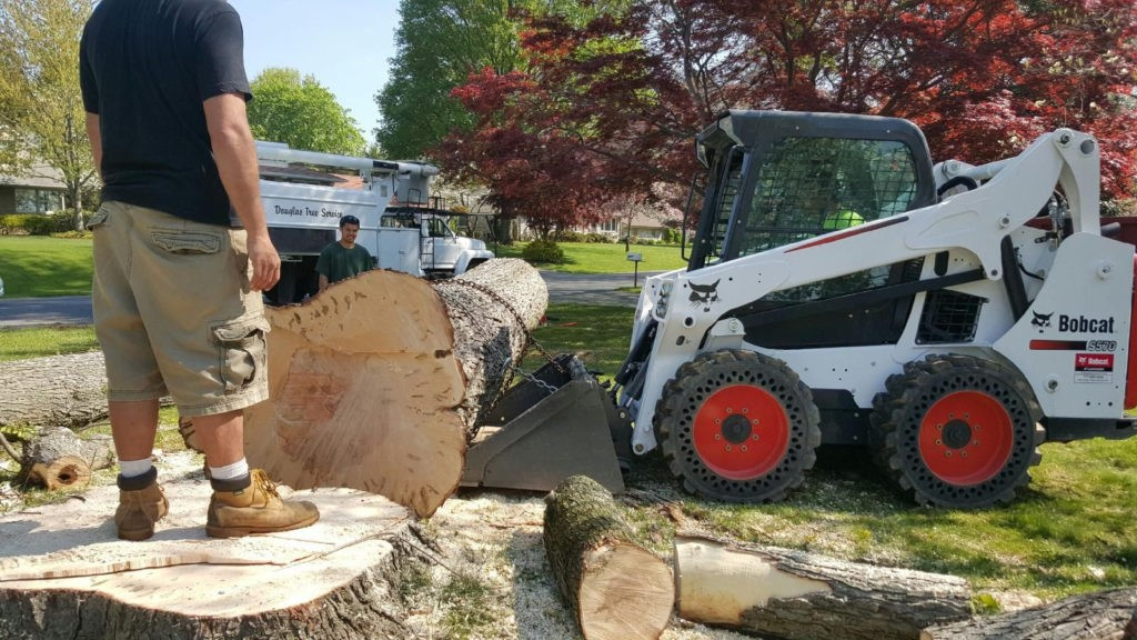 Murrieta-Temecula Tree Trimming and Stump Grinding Services-We Offer Tree Trimming Services, Tree Removal, Tree Pruning, Tree Cutting, Residential and Commercial Tree Trimming Services, Storm Damage, Emergency Tree Removal, Land Clearing, Tree Companies, Tree Care Service, Stump Grinding, and we're the Best Tree Trimming Company Near You Guaranteed!