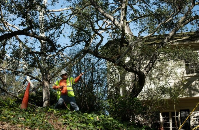 Rainbow-Temecula Tree Trimming and Stump Grinding Services-We Offer Tree Trimming Services, Tree Removal, Tree Pruning, Tree Cutting, Residential and Commercial Tree Trimming Services, Storm Damage, Emergency Tree Removal, Land Clearing, Tree Companies, Tree Care Service, Stump Grinding, and we're the Best Tree Trimming Company Near You Guaranteed!