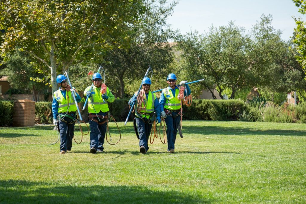 South Park-Temecula Tree Trimming and Stump Grinding Services-We Offer Tree Trimming Services, Tree Removal, Tree Pruning, Tree Cutting, Residential and Commercial Tree Trimming Services, Storm Damage, Emergency Tree Removal, Land Clearing, Tree Companies, Tree Care Service, Stump Grinding, and we're the Best Tree Trimming Company Near You Guaranteed!